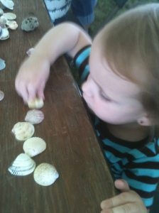 Sorting seashells for the mosaic project...